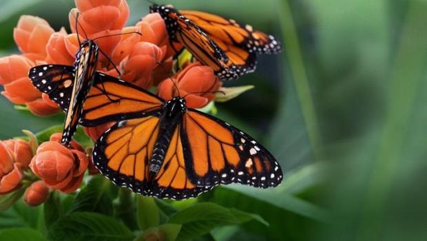 Papillons en liberté : spectacle haut en couleur !