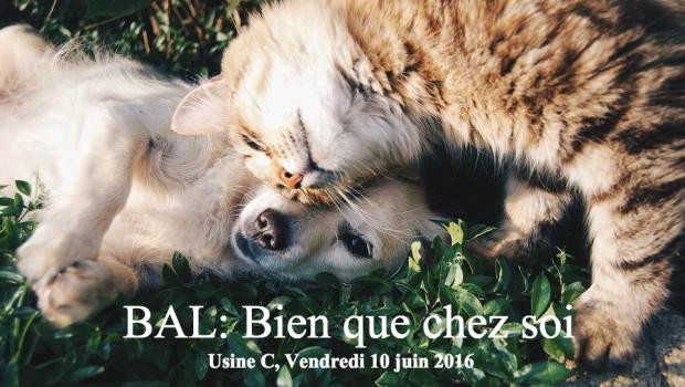Aider les animaux, fêter et réseauter ? C'est possible !