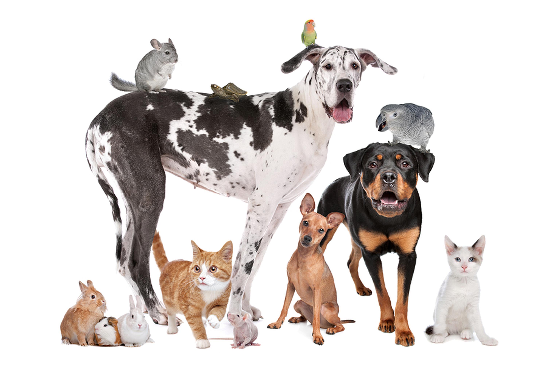 Le festival des animaux de compagnie arrive à Montréal